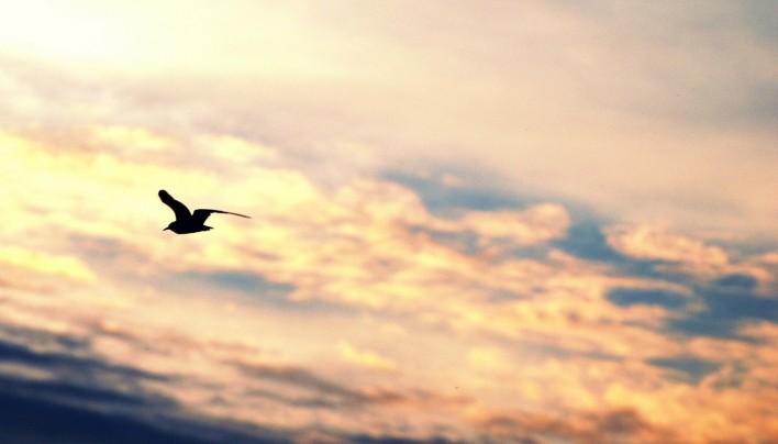 """Barbara B. po enem letu Hiše radosti: """"I believe I can fly…"""""""