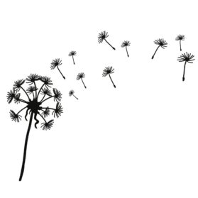 Dandelion-Picture-Drawing-279x279